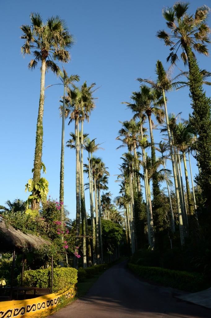東南植物楽園 ヤシの木