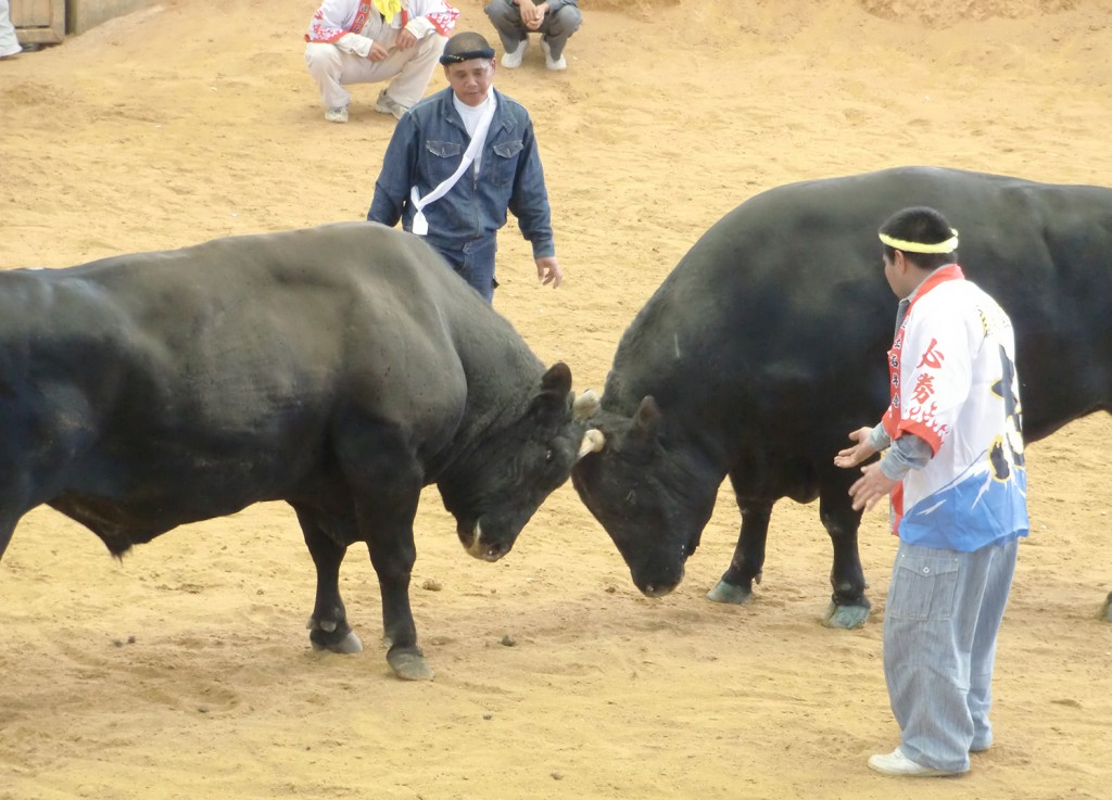bullfighting02