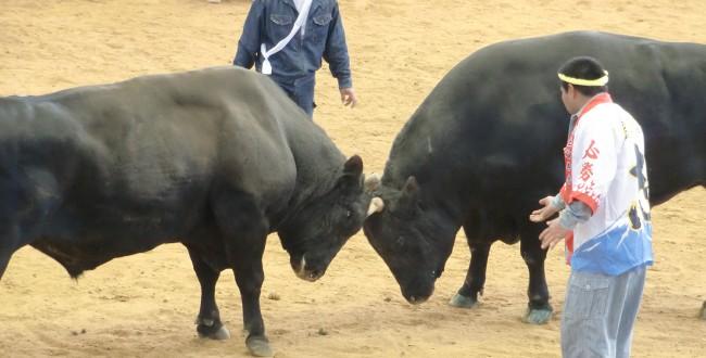 bullfighting02